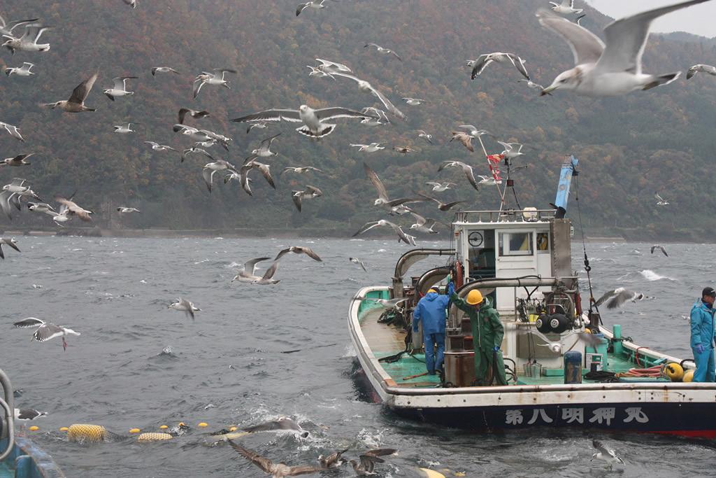 Japan, Sado island, fishers V.O.Randin