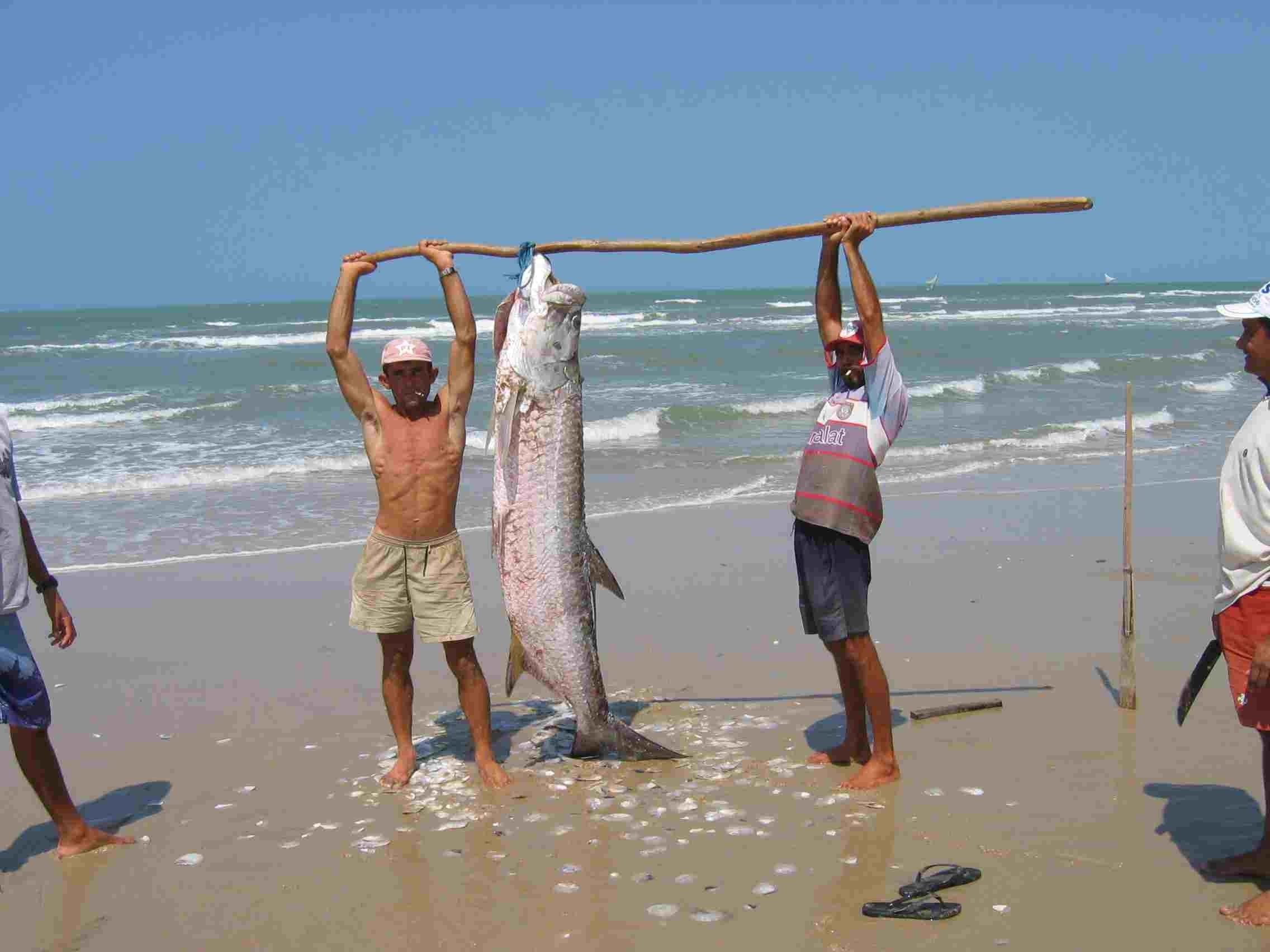 camurupim-pesca-artesanal-50754974c1d508e3c2a7367c52ead9e95fe8e95f