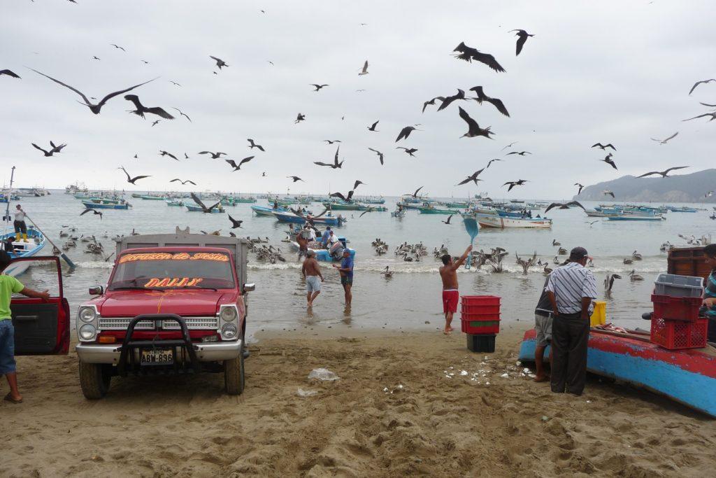 20081221_Ecuador_Kueste_0610-1